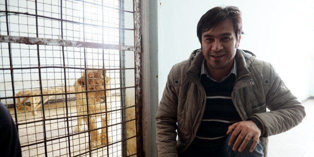 Agence France-Presse (AFP) text correspondent Sardar Ahmad, based in the Kabul office of AFP poses for a photograph with a lion at the zoo in Kabul on March 18, 2014, while doing a story about the feline. Ahmad, his wife, and two of his children were gunned down March 20, 2014, when four teenage gunmen attacked the Serena hotel in Kabul. AFP PHOTO/SHAH Marai (Photo credit should read SHAH MARAI/AFP/Getty Images)