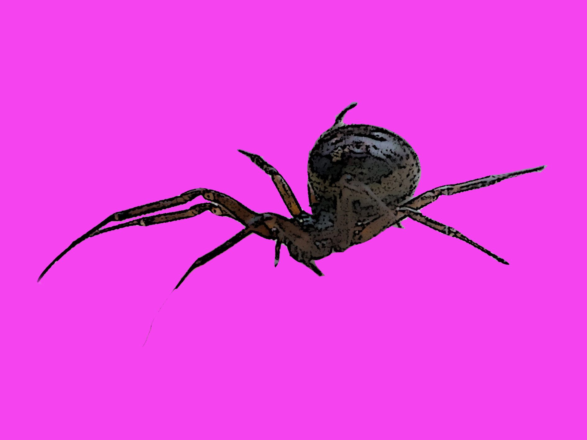 How To Spot A False Widow Spider After Infestations Cause Four Schools To Shut