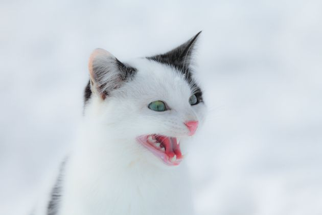JOKE: Cat Vs  Dog -- War Of The Diaries | HuffPost
