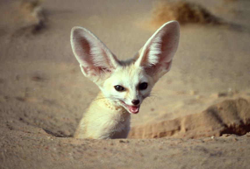 10 υπέροχα, παράξενα πλάσματα για την Παγκόσμια Ημέρα