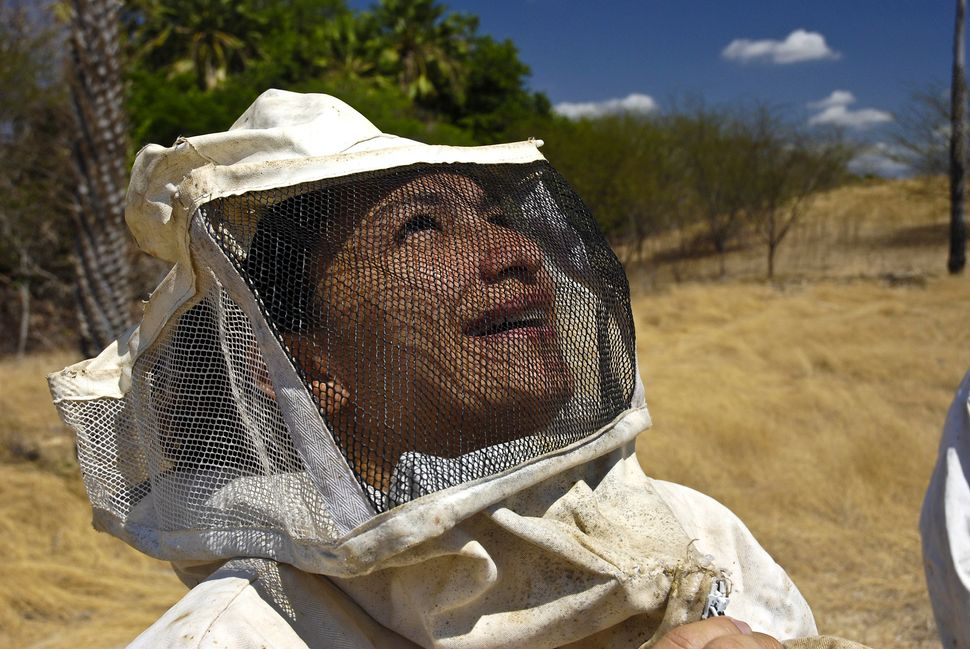 An apiarist works in Rio Grande Do Norte State, Brazil on Jan. 12, 2008.  (Lena Trindade/Brazil Photos/LightRocket/Getty Imag