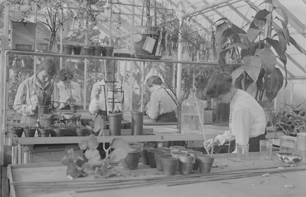 Students at Barnard College participate in a botany class at the college's greenhouse, ca 1915.