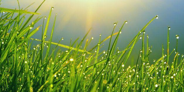 Ukraine, Kiev, dew on blades of grass