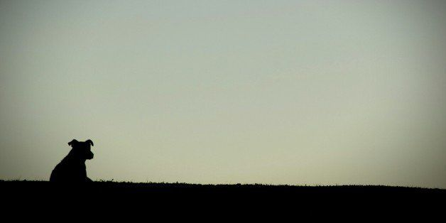 Silhouette Dog On Field Against Clear Sky