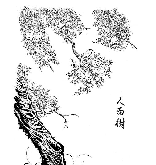 In one of his many encyclopedic compendia of yokai, Mizuki Shigeru describes a tree in Aomori Prefecture that, according to l
