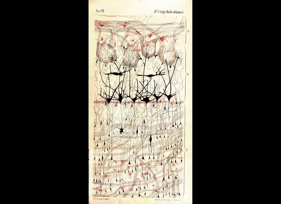 <em>Camillo Golgi (1875)</em>. Courtesy of Dr. Paolo Mazzarello, University of Pavia - Department of Experimental Medicine -