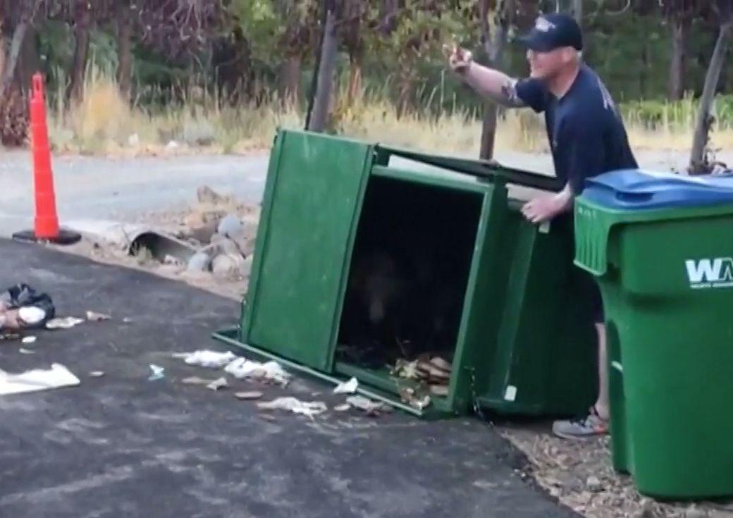 Drei junge Bären wollen Mülltonne leer fressen – dann rückt die Feuerwehr an