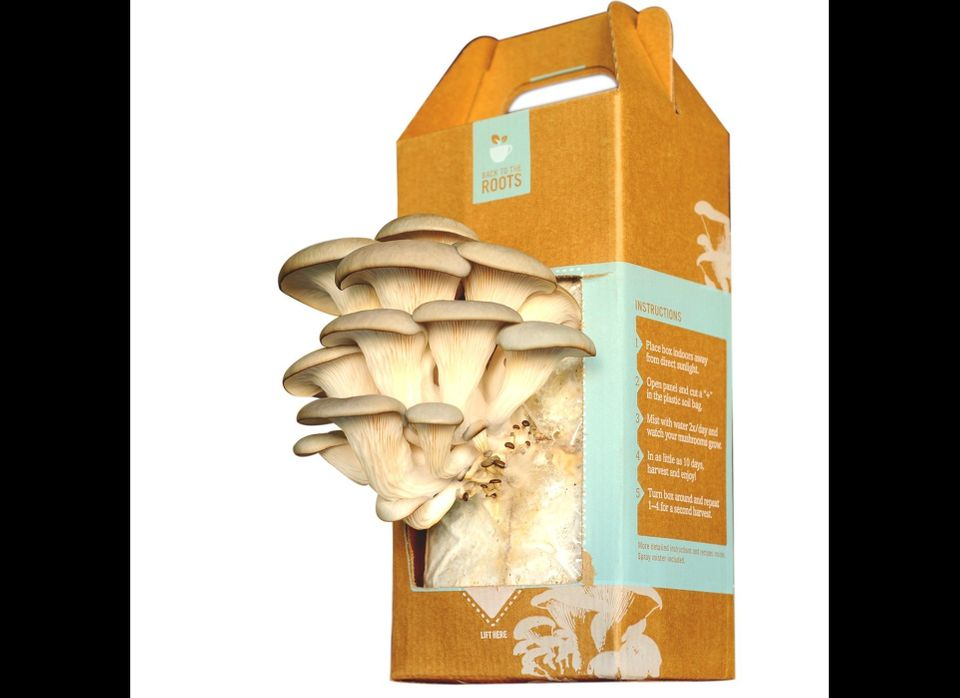 "What boomer doesn't love a good mushroom? Oh wait; it's not 1968 anymore. OK, well <a href=""http://www.backtotheroots.com/"" t"
