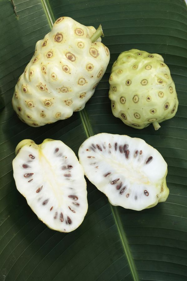 "You may have heard of <strong>noni juice</strong> as a hot, new beauty product that <a href=""http://www.celebuzz.com/2013-08-"