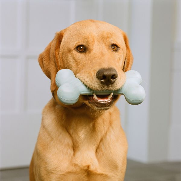 Pet toys can not only have coliform bacteria on them, they can also house yeast, mold, and Staph bacteria, none of which are