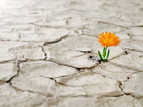 Maybe you weren't born a natural optimist, but now's a good time to start practicing what optimists do instinctively: Look fo
