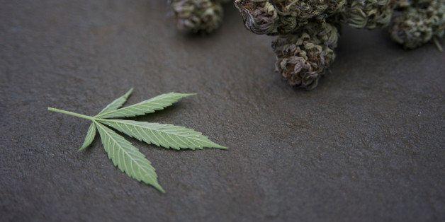 Marijuana buds and leaf on stone.