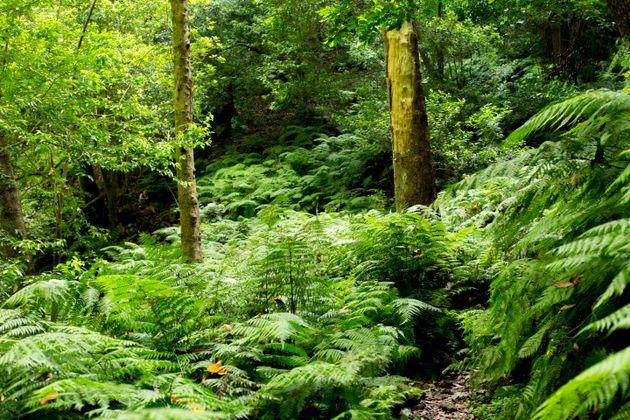 도시를 떠날 수 없는 당신이 숲을 즐길 수 있는 5가지