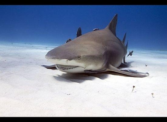 Naked Man Who Jumped Into Aquarium Shark Tank Wanted By