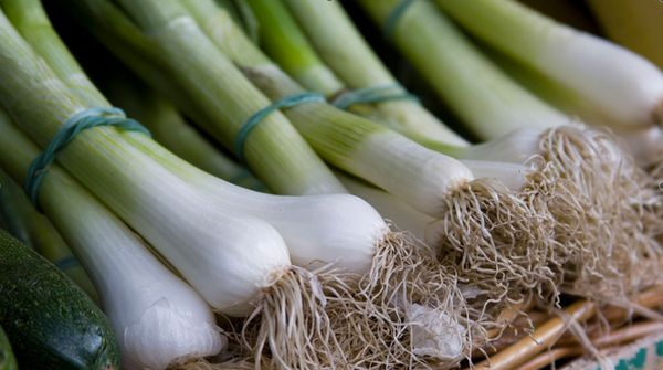 Alliums, the botanical family that includes leeks, onions, and garlic, share many remarkable traits. They can help lower bloo