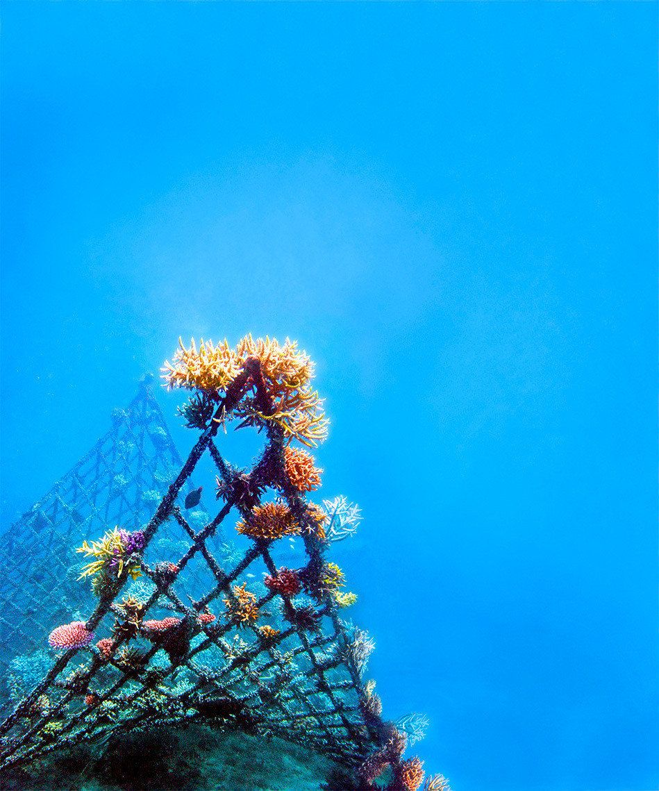 """""""Manta,"""" the first project Colleen Flanigan worked on in Bali, is shown in 2004.  It was designed by Wolf Hilbertz."""