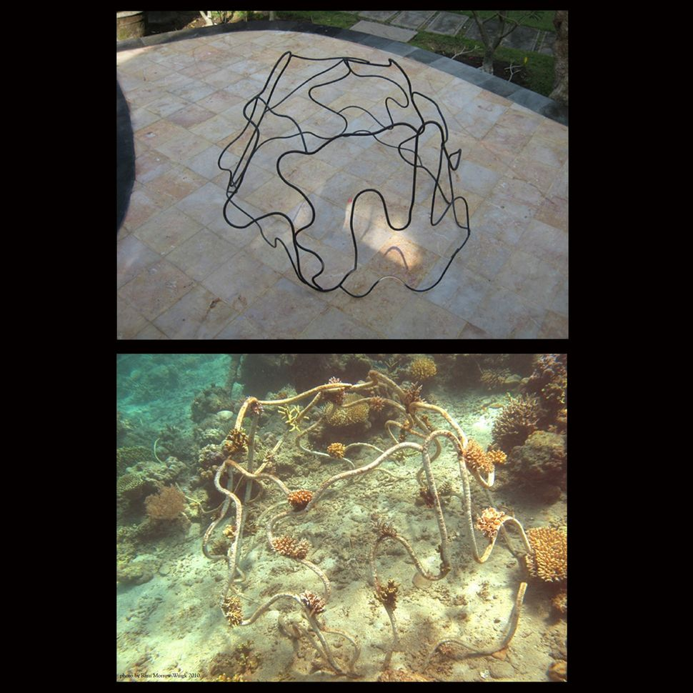 "Top: Flanigan's sculpture ""Coral Skirt"" before installation in Bali, Indonesia, December 2009. Bottom: at 3 months growth, Ma"