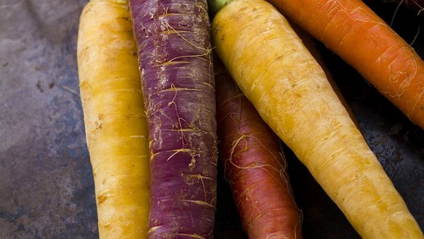 <strong>What they are: </strong>Multi-colored carrots that come in purple, red, yellow and white.  <strong>The backstory:</st
