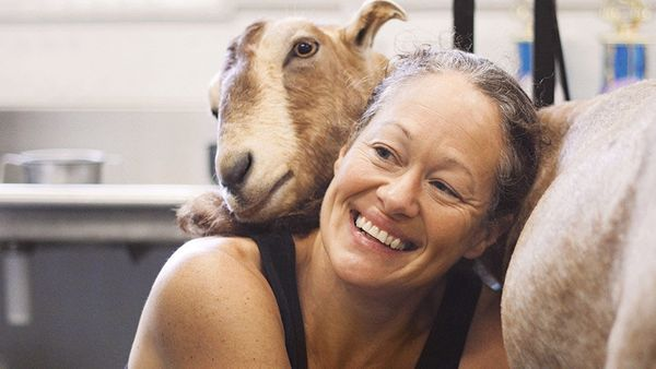 Lois Reichert of Knoxville, Iowa, milks one of the 15 goats at her microdairy.