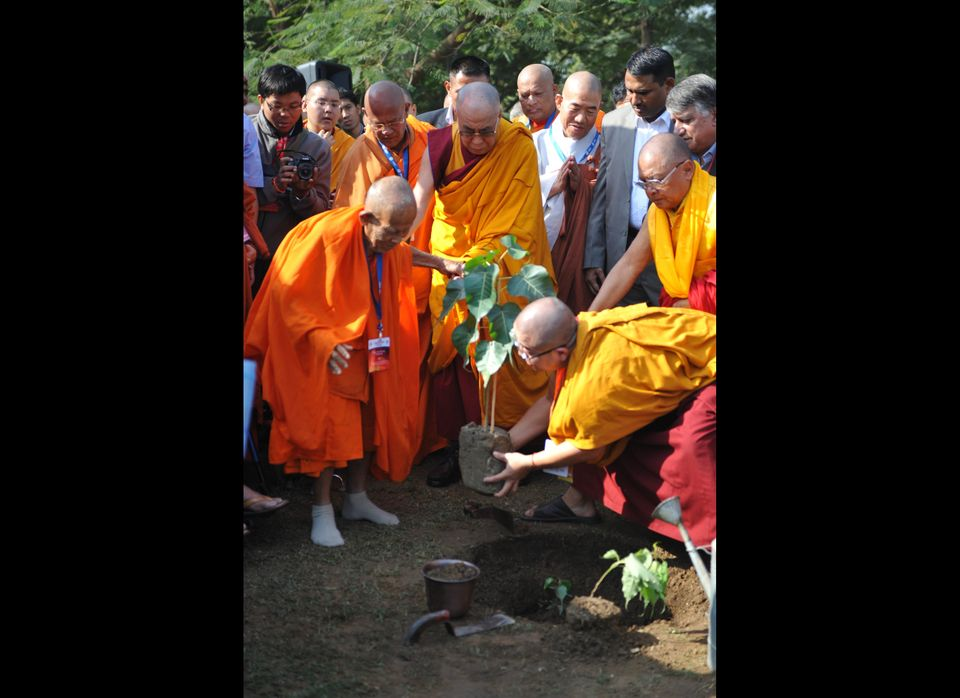 Tibetan spiritual leader the Dalai Lama (C) helps a monk at a Bodhi tree sapling plantation ceremony to mark the 2600th year