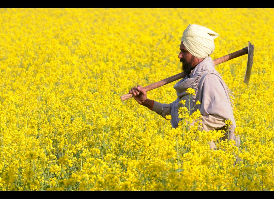 An Indian farmer Sukhwinder Singh holds a shovel as he walks through his mustard field in a village near Muktsar on January 2