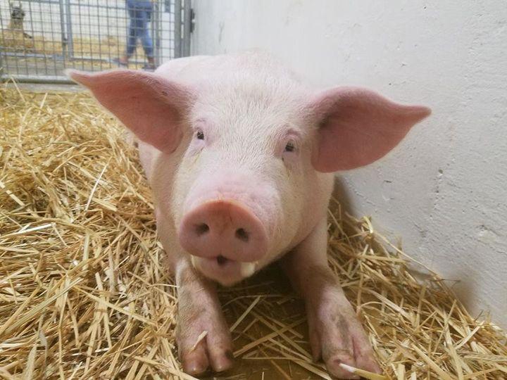 Flo Rida, or Flo for short, enjoying his new life at Ziggy's Refuge Farm Sanctuary in North Carolina.