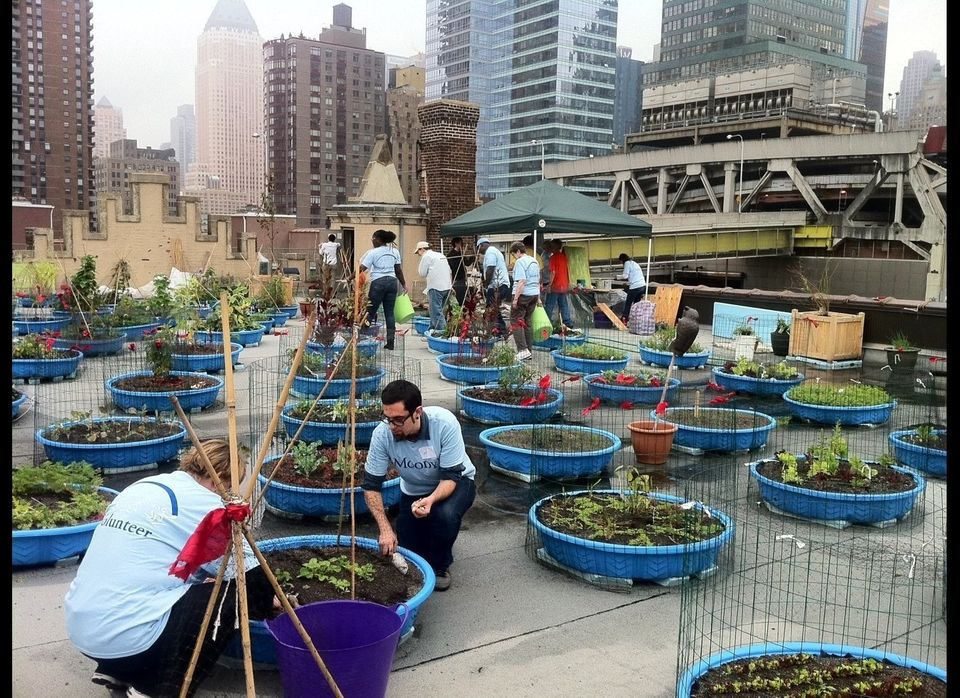 The Hell's Kitchen Farm Project, a collaborative effort of Metro Baptist Church, Rauschenbusch Metro Ministries, Metropolitan