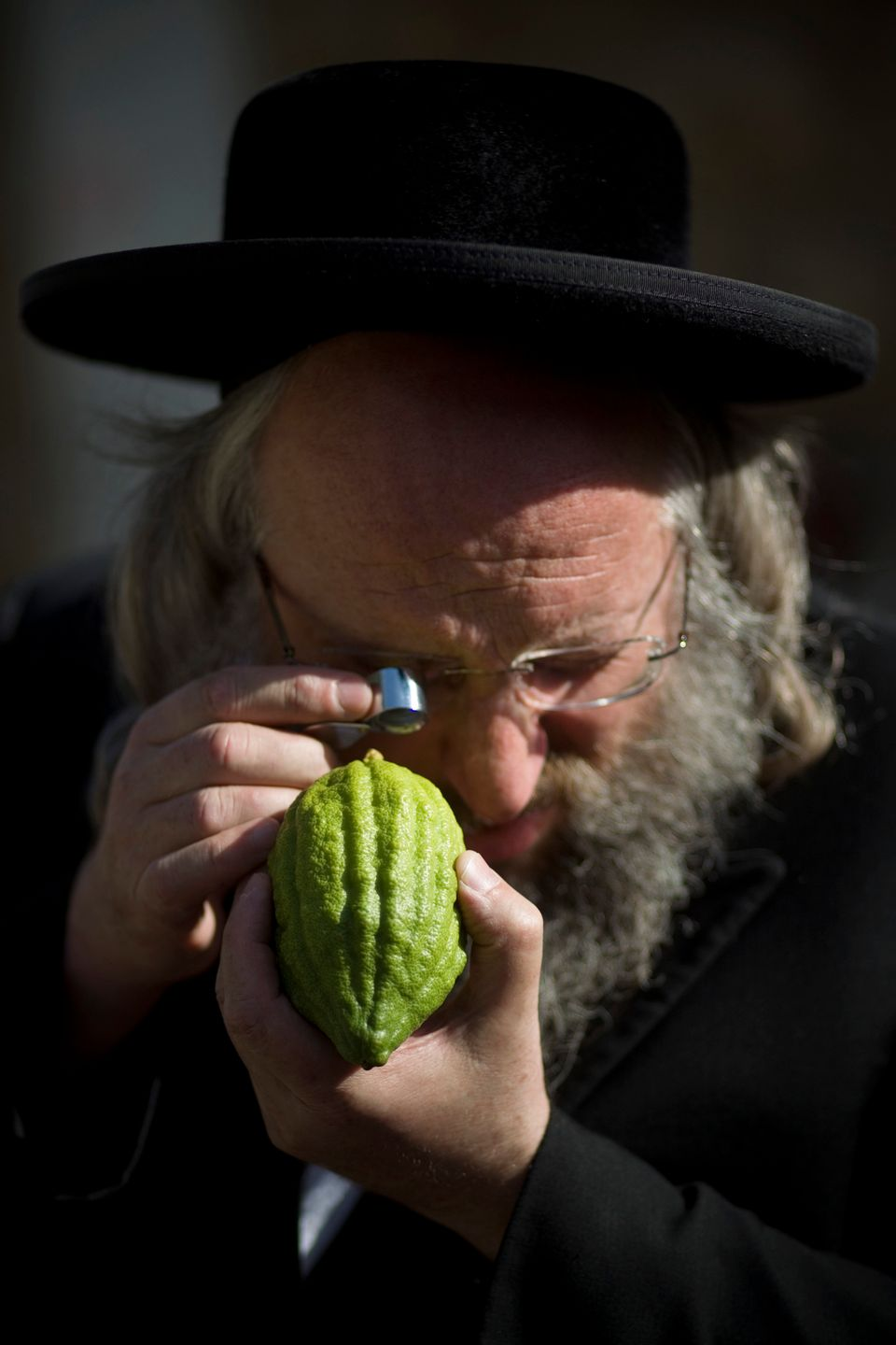 An Ultra Orthodox Jewish man checks an etrog, a lemon-like citrus fruit, for blemishes to determine if is ritually acceptable