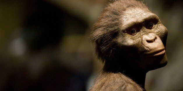 HOUSTON  - AUGUST 28:  A sculptor's rendering of the hominid Australopithecus afarensis is displayed as part of an exhibition