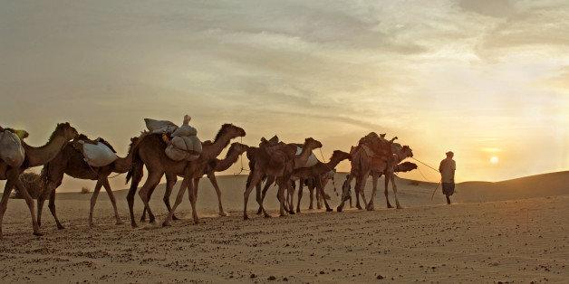 Camel carbon dating