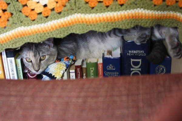 Our kitten Freyja who strayed into our yard and our hearts is clearly a bookworm.