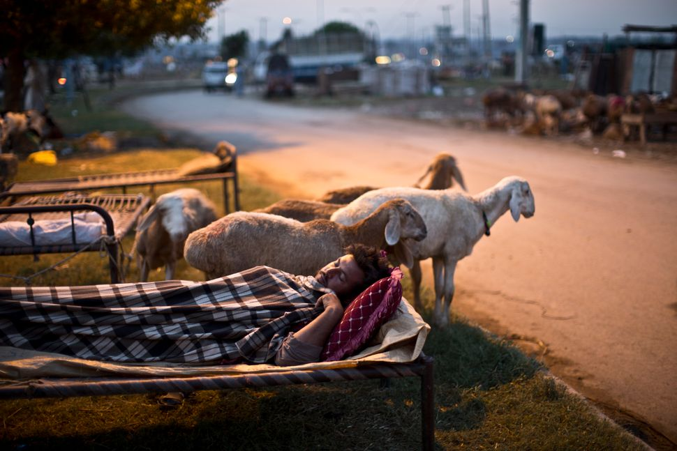 A Pakistani vendor sleeps on a bed along a street next to his sheep, on the Muslim holiday of Eid al-Adha, or Feast of Sacrif