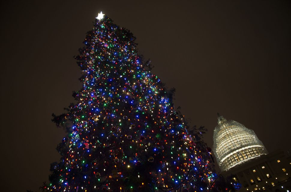 An 88-foot white spruce is lit as the Capitol Christmas Tree at the US Capitol in Washington, DC, December 2, 2014. This year