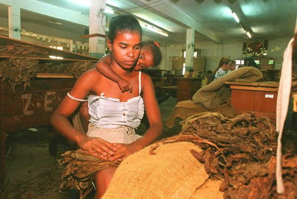 Circa 1995 - In the company of her daughter, a worker at a tobacco leaf cleaning station gets leaves ready for shipping to a