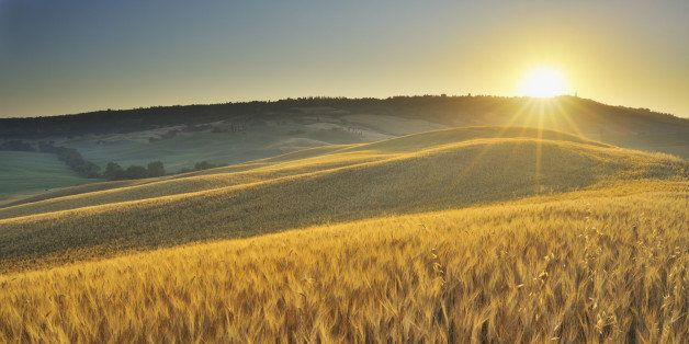 Grainfield with Sunrise in the Summer, San Quirico d'Orcia, Provinz Siena, Tuscany, Italy