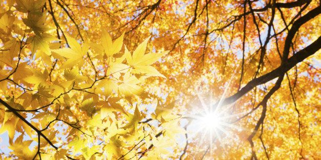 the sunlight through fall forest plants