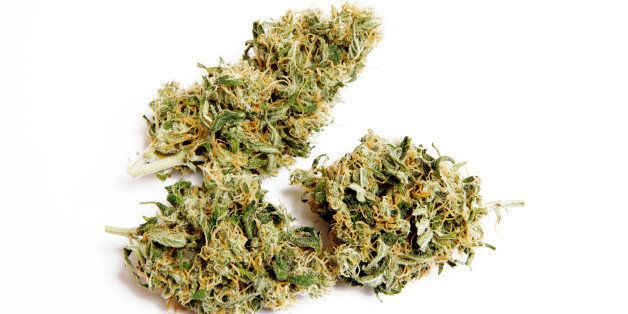 Medical marijuana. Used by patients with varying health symptoms. This is a Cannabis Sativa, also known as Skunk.