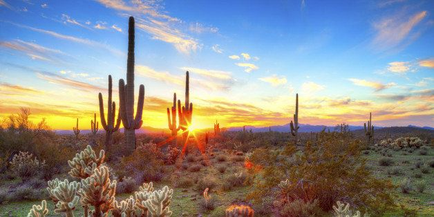 Sun is setting beetwen Saguaros, in Sonoran Desert.