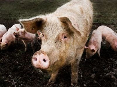 Moving the Needle Forward on Animal Welfare, Food Safety