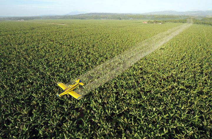 (FILES) Picture taken on April 22, 2008 of a crop duster plane spraying fungicide to protect the 7,000 hectare banana plantat