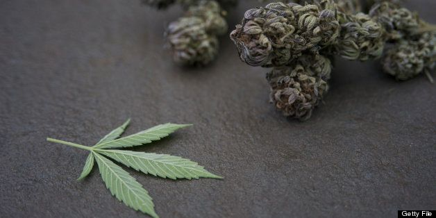 Marijuana buds and leaf on stone.