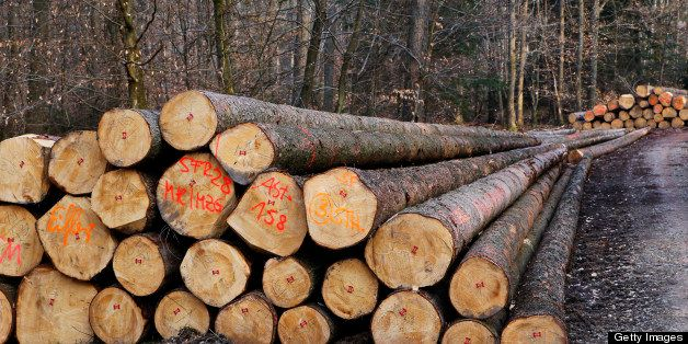 lumbering, stapled logs