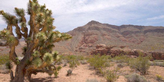 Joshua Tree & Desert