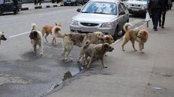 Oran : 618 animaux errants