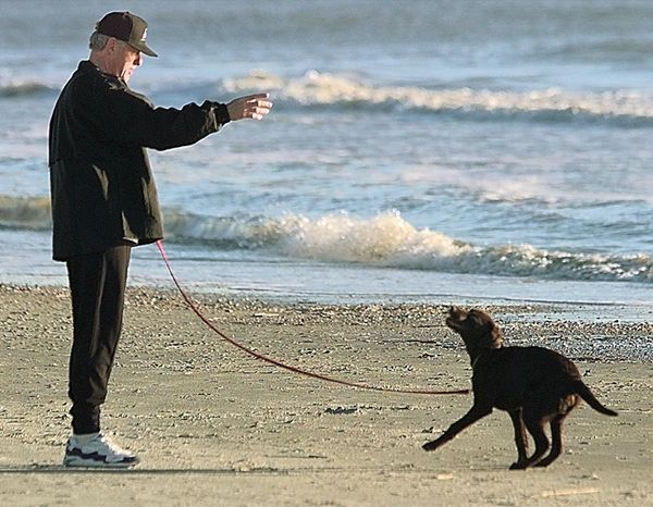 U.S. President Bill Clinton gives his new chocolate Labrador 'Buddy' some instructions on the beach in Hilton Head, SC, 31 De