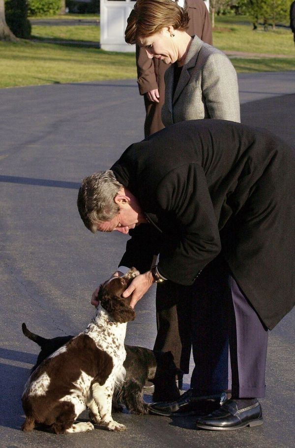 U.S. President George W. Bush bends down to pet his dogs Spot and Barney (hidden) as he and first lady Laura Bush return to t