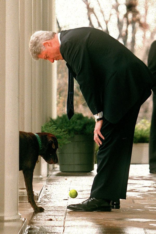 U.S. President Bill Clinton bends over to pick up a ball dropped by his dog 'Buddy' during a game of fetch in the Rose Garden