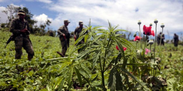 Mexican soldiers stand amidst poppy flowers and marijuana plants during an operation at Petatlan hills in Guerrero state, Mex