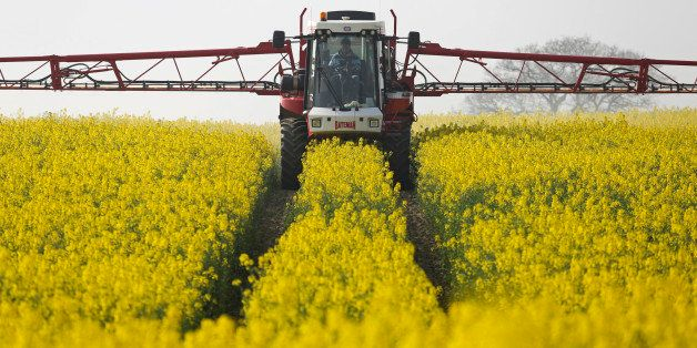 A farmer uses a Bateman crop sprayer, produced by Bateman Engineering Ltd., to spray a field of rapeseed crops in Basildon, U