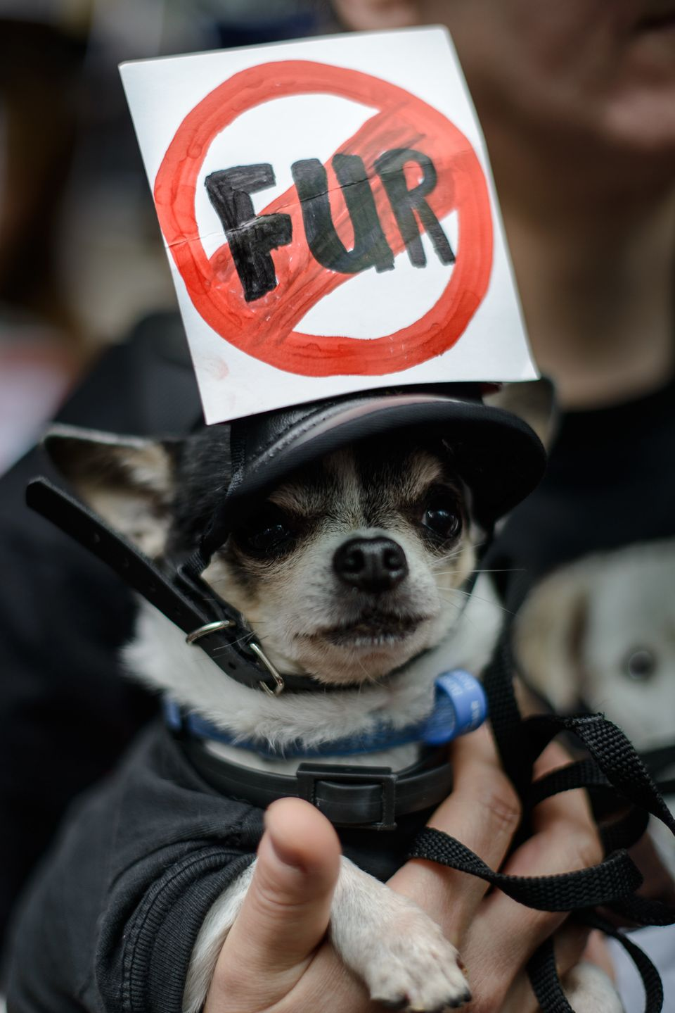 A dog is held by a demonstrator in a protest against fur products as the Hong Kong International Fur & Fashion Fair gets unde